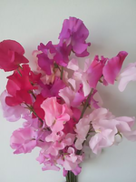 Pink Medley